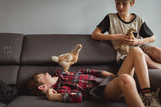 Boys with baby chickens on couch