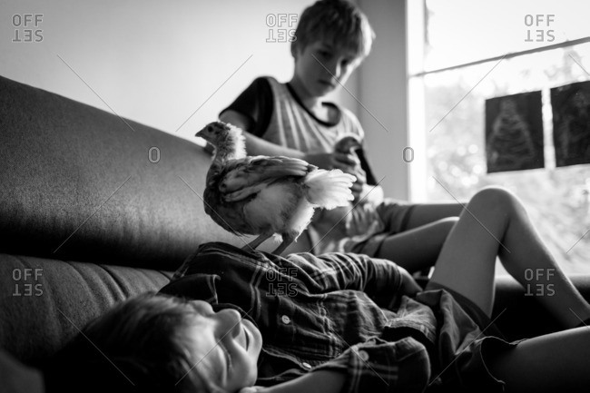 Boys with baby chicken on couch