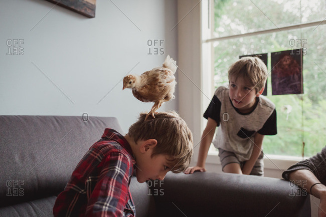 Chick standing on boy's head