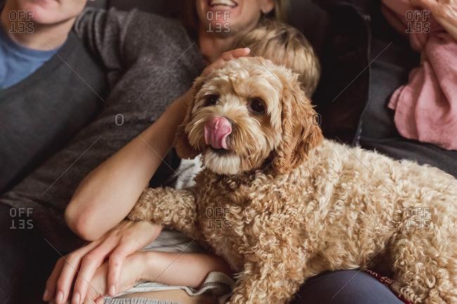 Dog sitting on family's laps