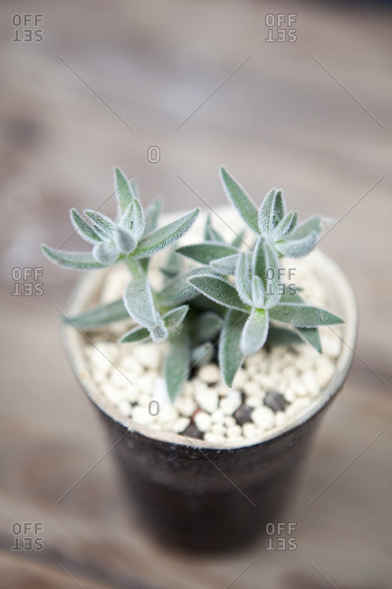 Close-up shot of potted succulent