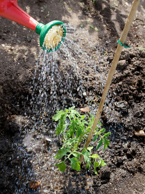 Plant being watered outdoors