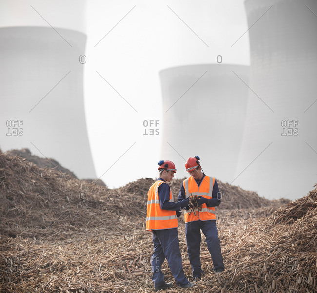 Workers with willow biomass fuel