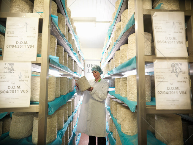 Head cheese-maker inspecting cheeses in cheese-making factory