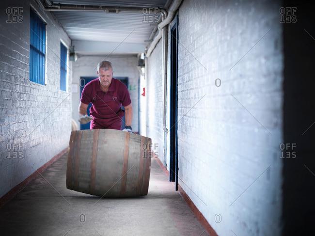 Worker rolling whisky barrel in distillery