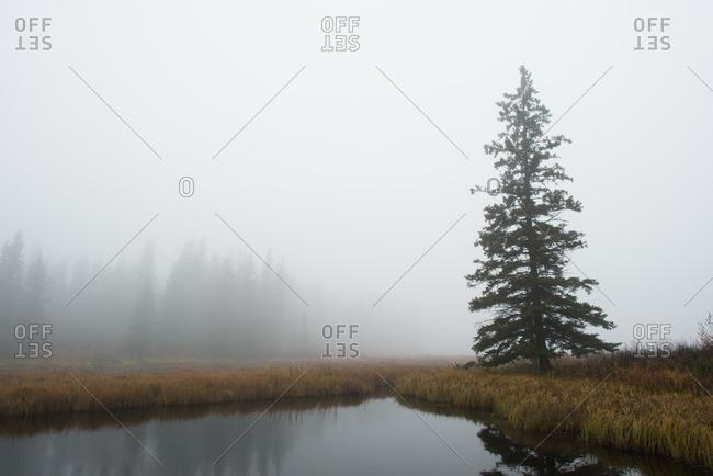 Still pond in foggy countryside