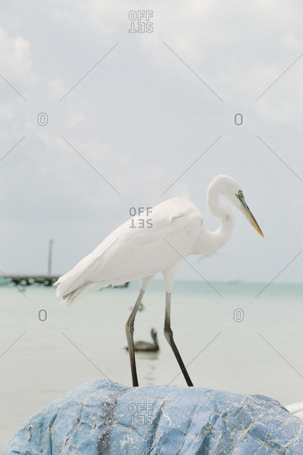 A heron standing on shore