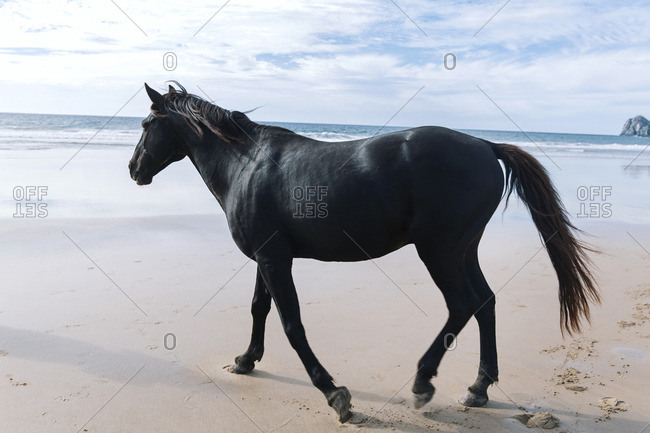 A black horse on a beach