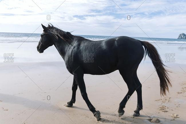 A black horse on a beach