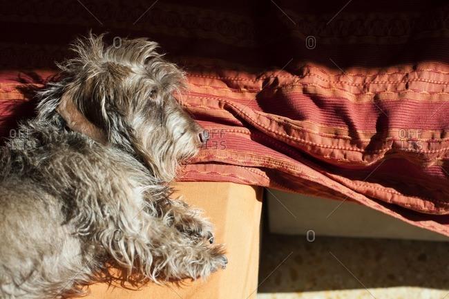 Dog in sunlight lying down