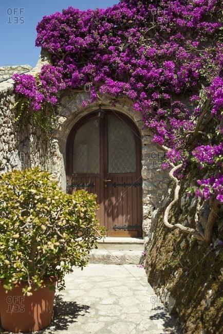 Front door with bougainvillea vines