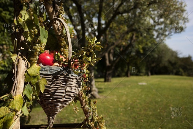 Wicker basket with fall fruit