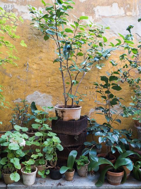 Plants in pots along a wall