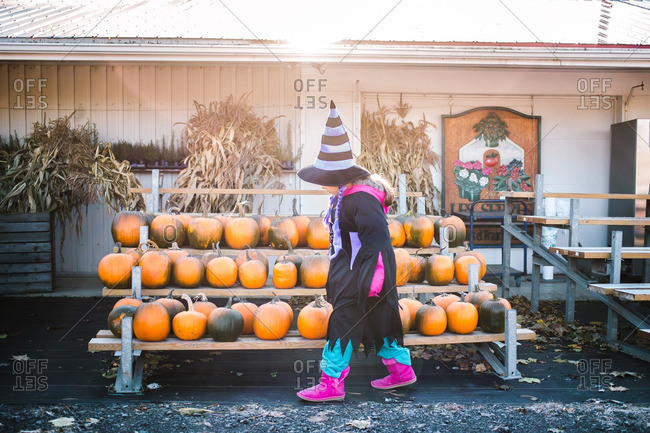 Little girl in a witch costume looking at pumpkins
