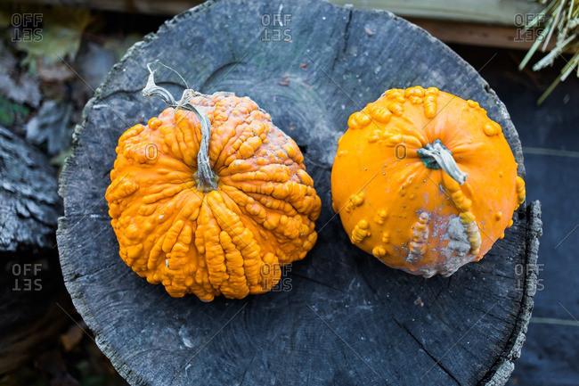 Two orange pumpkins on an old tree stump