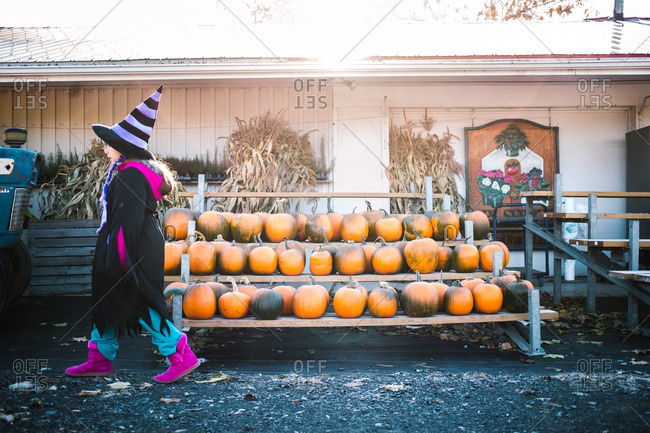 Little girl in a witch costume walking past pumpkins at a farm stand