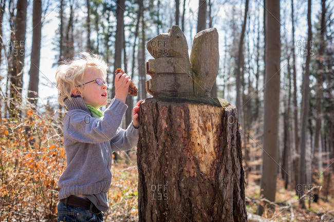 Boy examining pine cone in forest