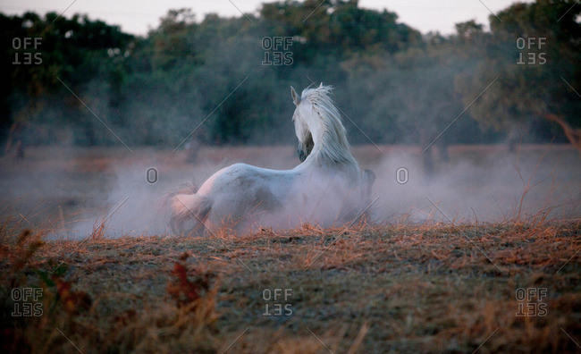 Horse walking in foggy field