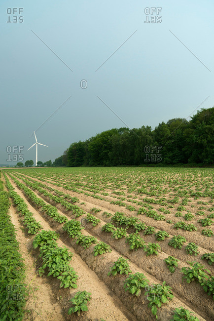 Wind turbine by field