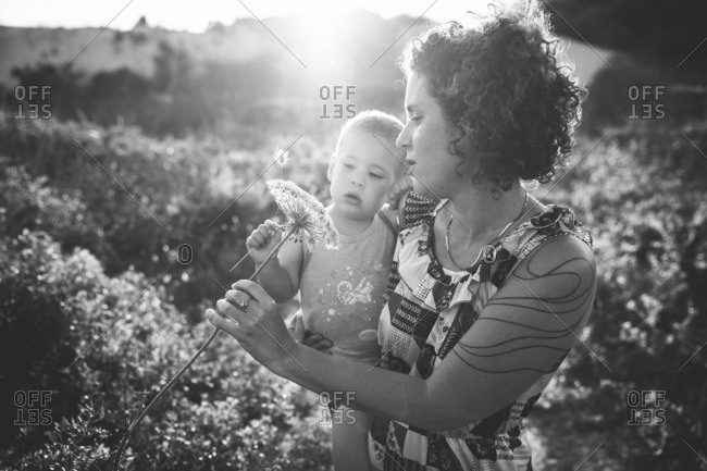 Woman holding her son and looking together at a Daucus carota flower