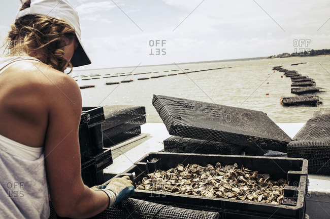 Woman looking at oysters in cages