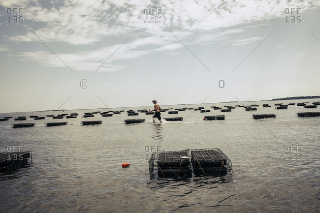 Man working on oyster farm