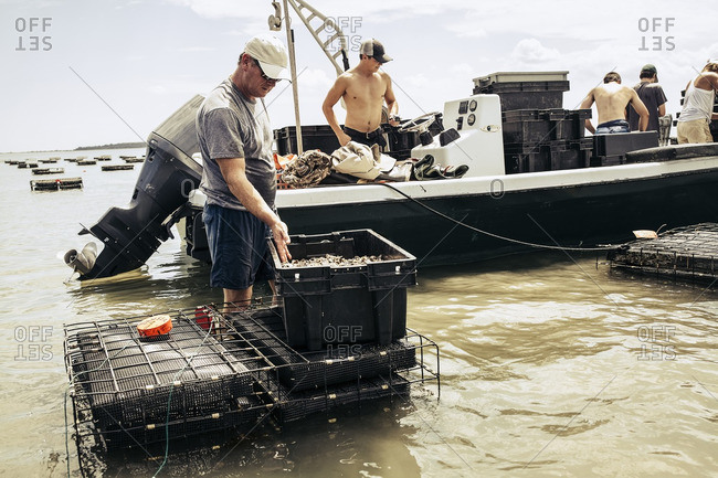 People working on oyster farm