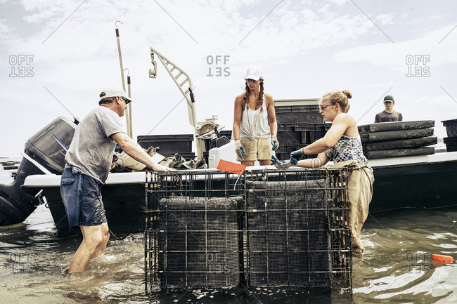People working at an oyster farm