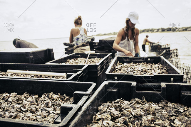 Women by oyster harvest