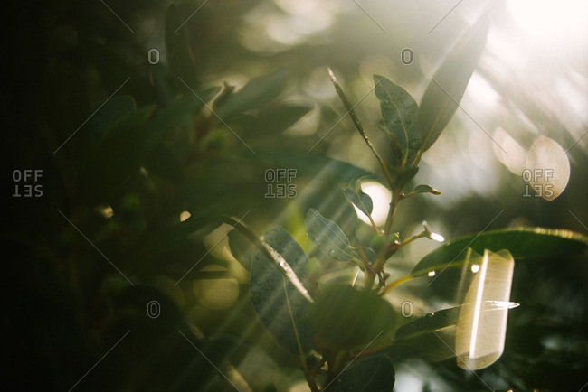 Sun streaming through plant leaves