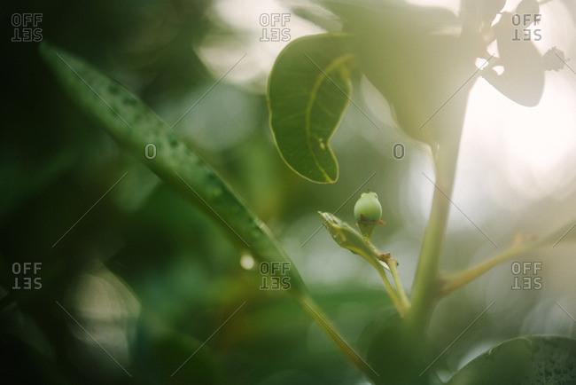 Sunlight streaming through plant leaves