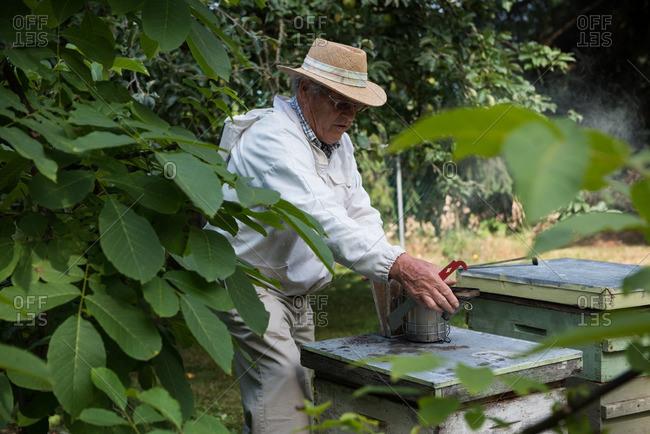 Beekeeper in apiary garden