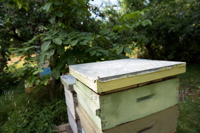 Bee hive in apiary garden
