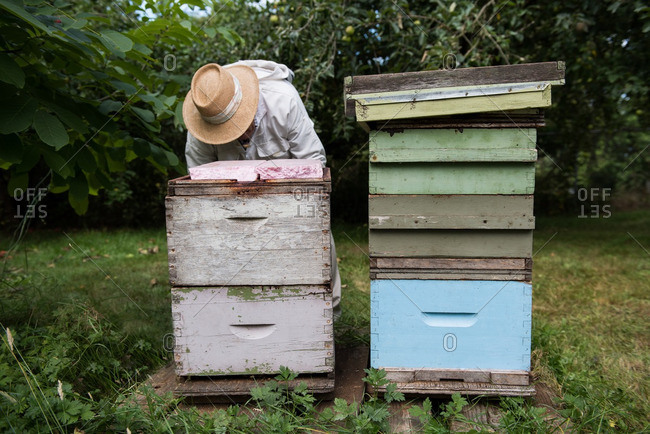 Beekeeper working in apiary garden