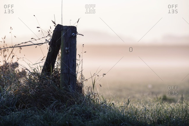Fence post in morning mist