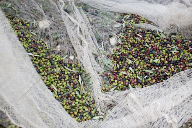 Olives in net