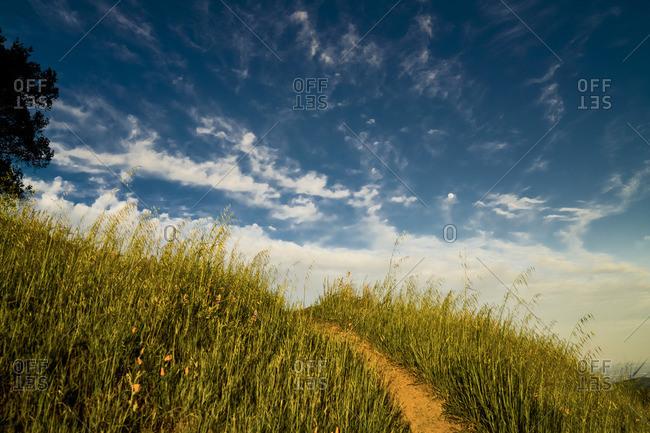 Trail leading through a grassy meadow on a hillside