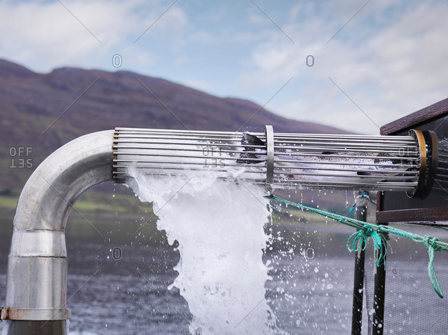 Salmon harvested from water through pipe on salmon farm