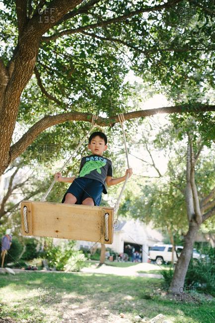 Boy standing on a tree swing