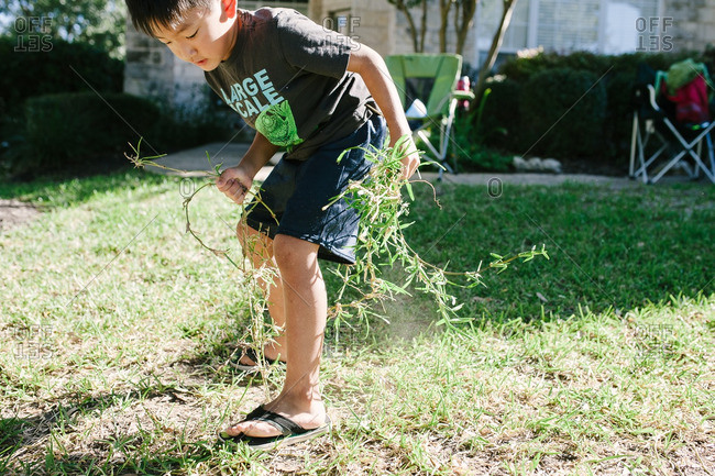 Boy pulling grass from lawn