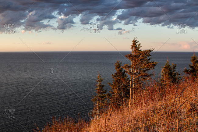 Pine trees on a hill over the ocean