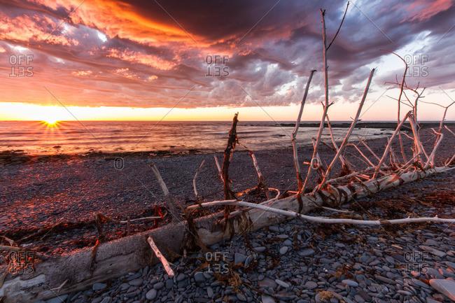 Dead tree on a pebble beach on the Atlantic