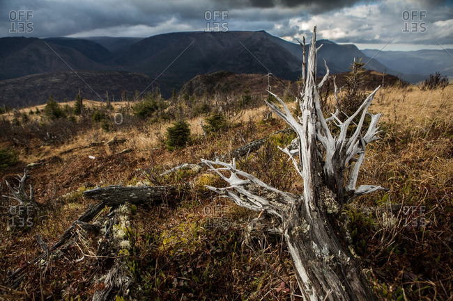 Tree stump in a forest with the mountains in the background