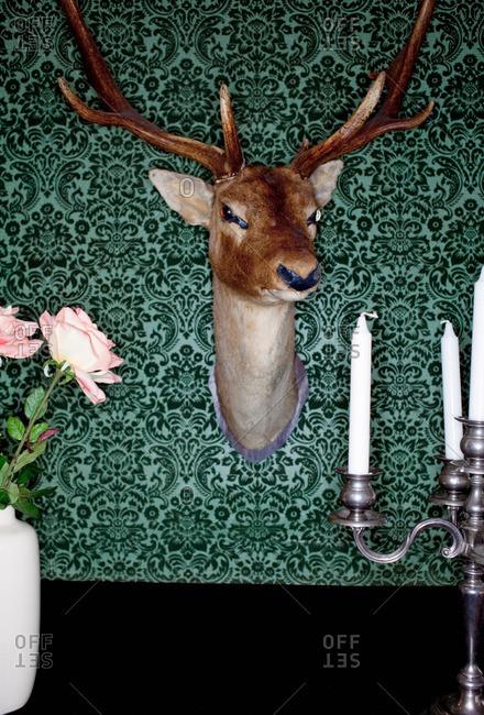 Deer head mounted on dining room wall