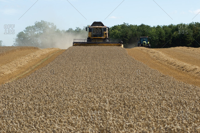 Thresher harvesting wheat - Offset Collection