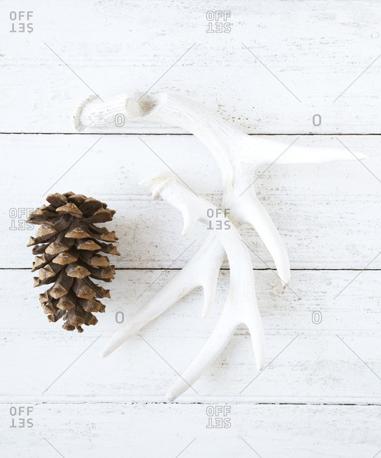 Antlers and a pine cone