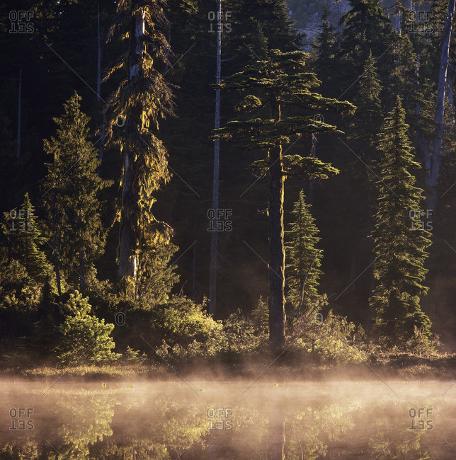 Morning mist on spectacle lake, Caren Range, Sechelt Peninsula, British Columbia, Canada.