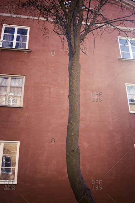Tree in front of building