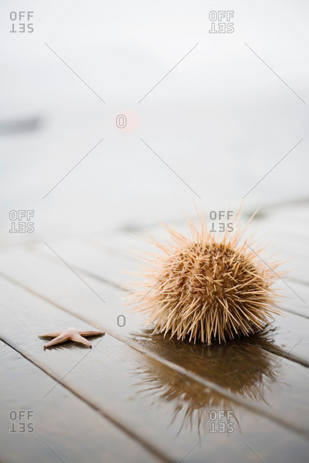 Sea star and Sea urchin on a pier