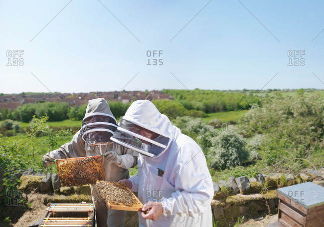 Beekeepers inspect honey combs